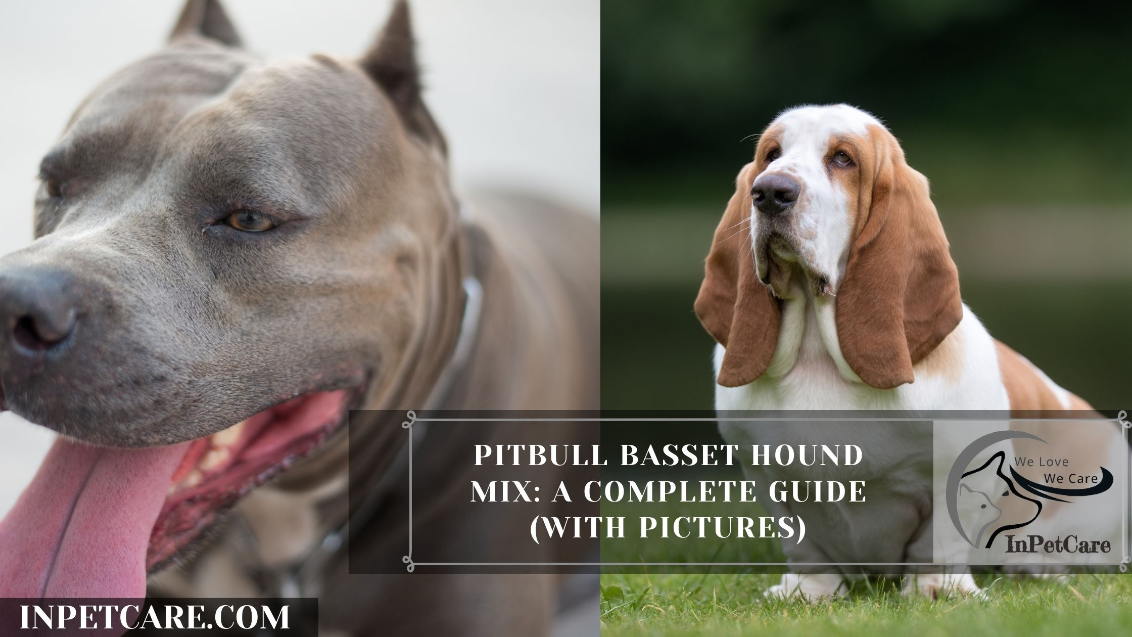 Pitbull Basset Hound Mix: A Complete Guide (With Pictures)
