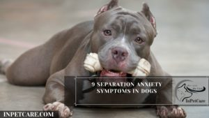9 Separation Anxiety Symptoms In Dogs