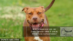 When Should You Be Concerned About Your Pitbulls Clingyness?