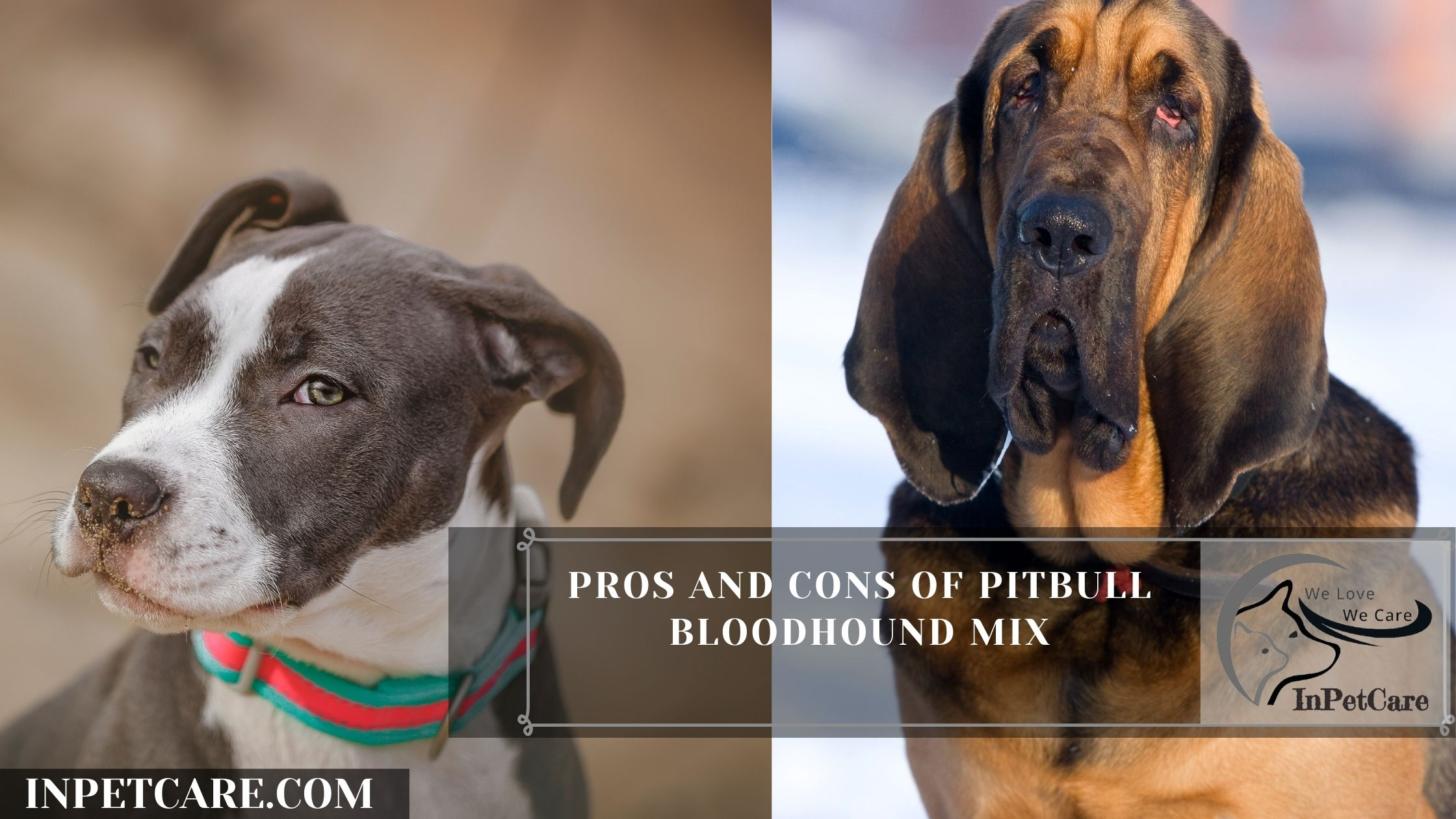 Pros And Cons Of Pitbull Bloodhound Mix