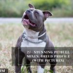 27+ Stunning Pitbull Mixes: Breed Profile (With Pictures)