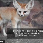 Fennec Foxes As Pets: Cost, Legalities, Risks & Ease of Care