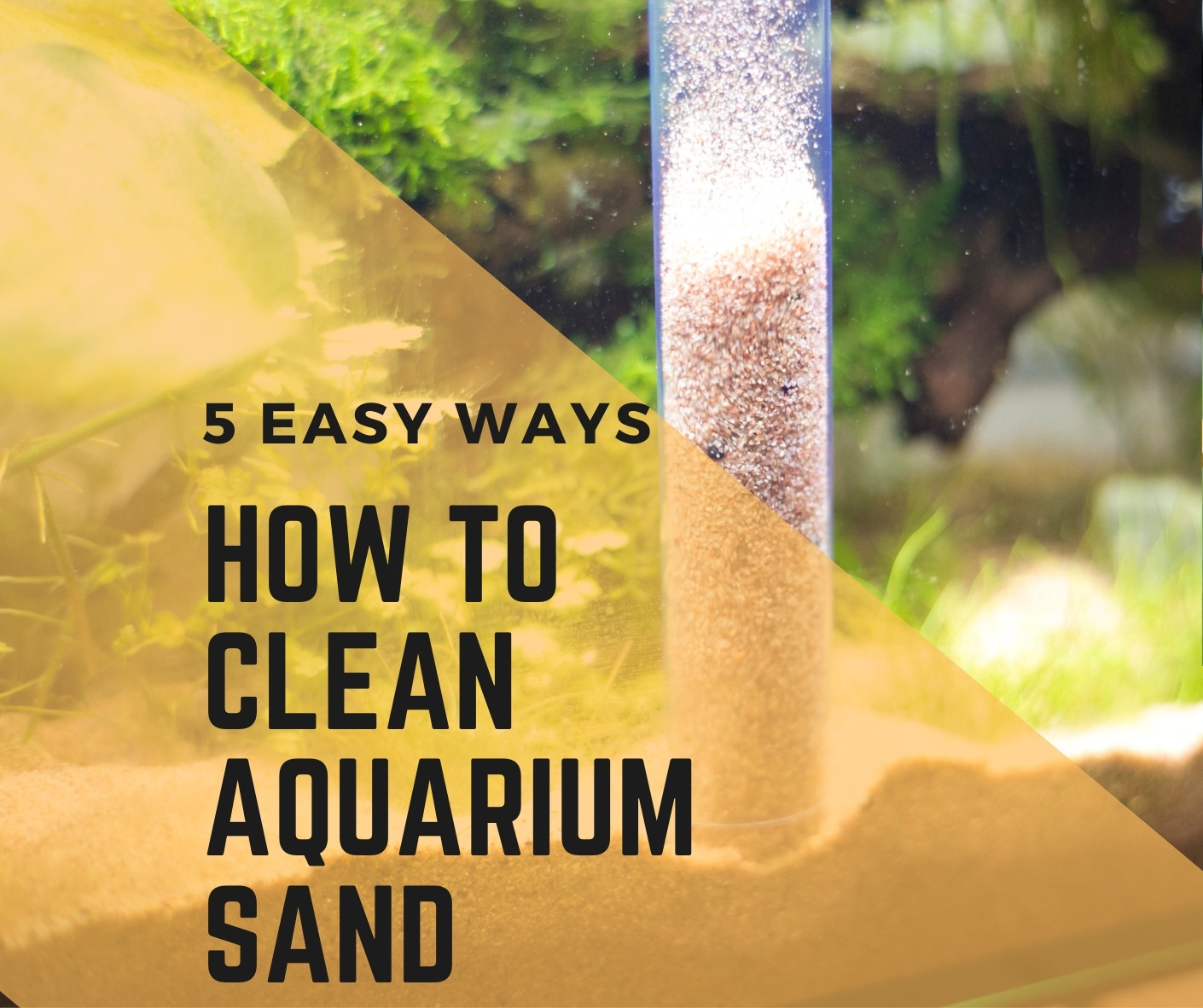 How to Clean Aquarium Sand? 5 Simple Steps (With Pictures)