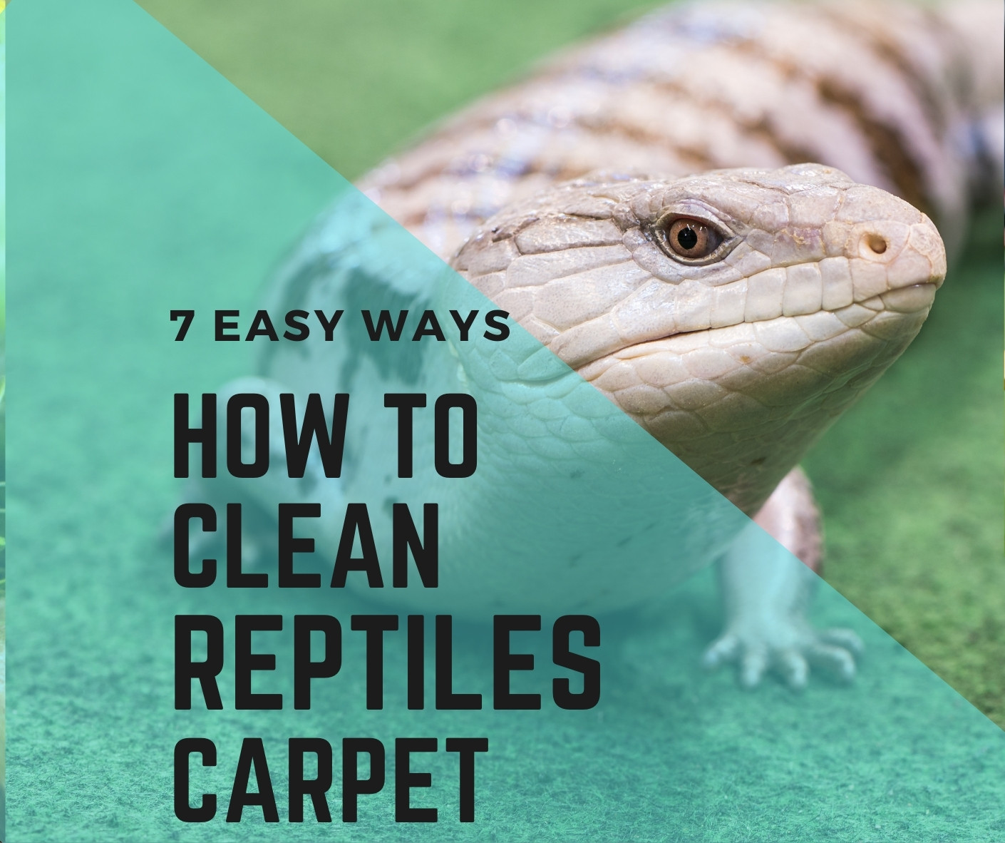 How to clean reptile carpet? easy ways
