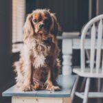 6 best Pet boarding Alternatives to keep your pal happy