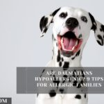 Are Dalmatians hypoallergenic? 9 Tips For Allergic Families