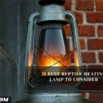 11 Best Reptile Heating Lamp To Consider