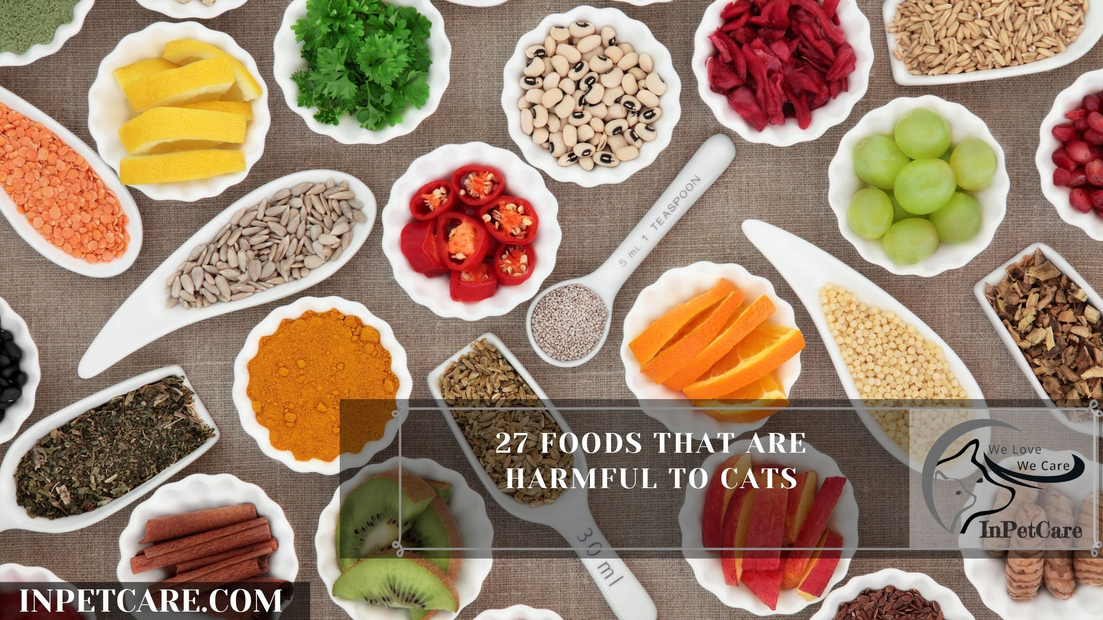 27 Foods That Are Harmful To Cats