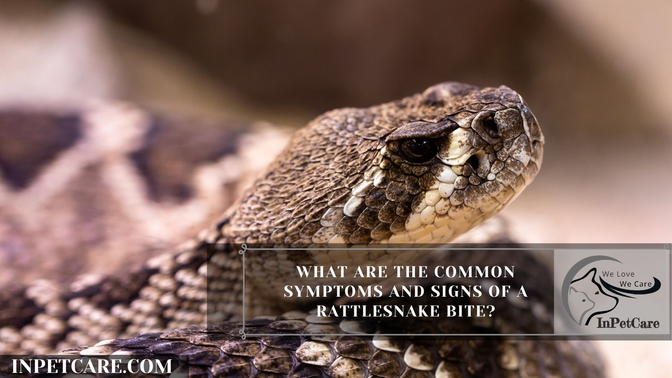What are the common Symptoms and Signs of a Rattlesnake bite?