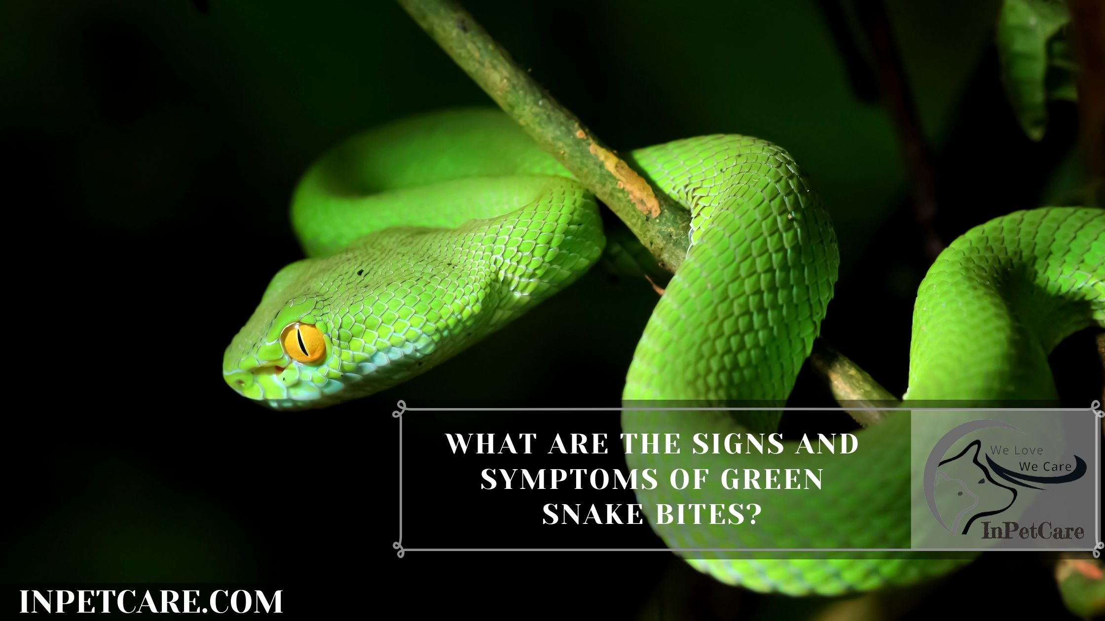 What are the signs and symptoms of green snake bites?