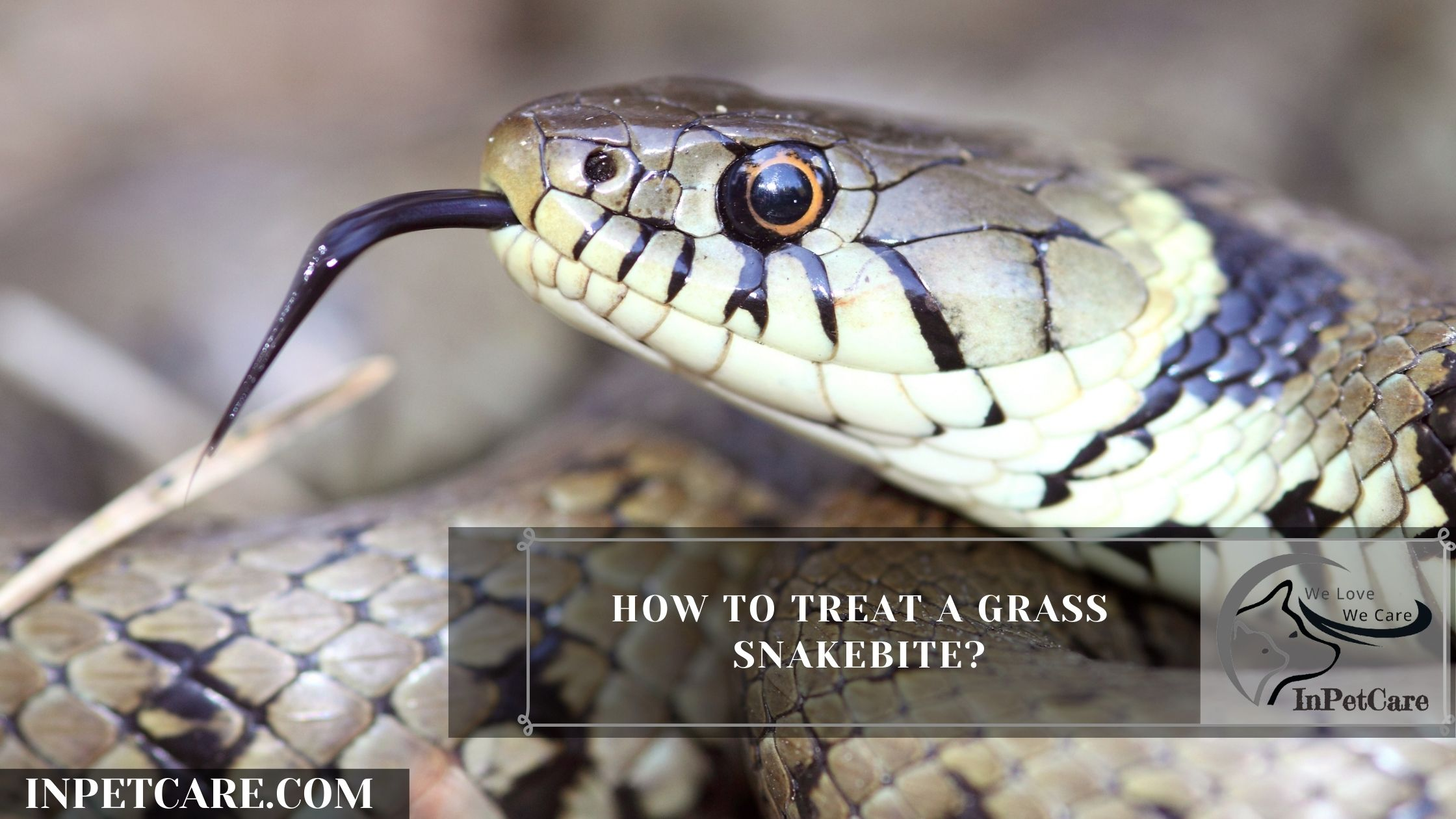 How To Treat A Grass Snakebite?
