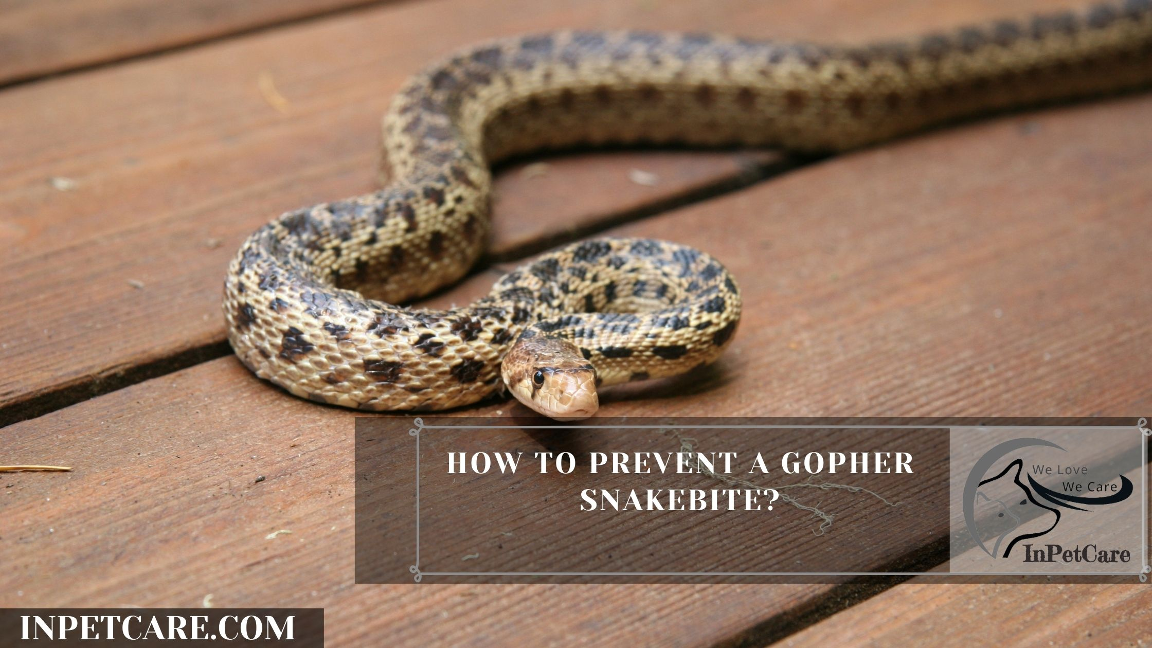How To Prevent A Gopher Snakebite?