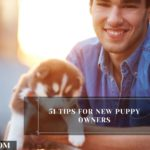 When Can You Touch a Newborn Puppy? - 9 Things To Look