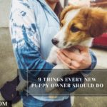 9 Things Every New Puppy Owner Should Do