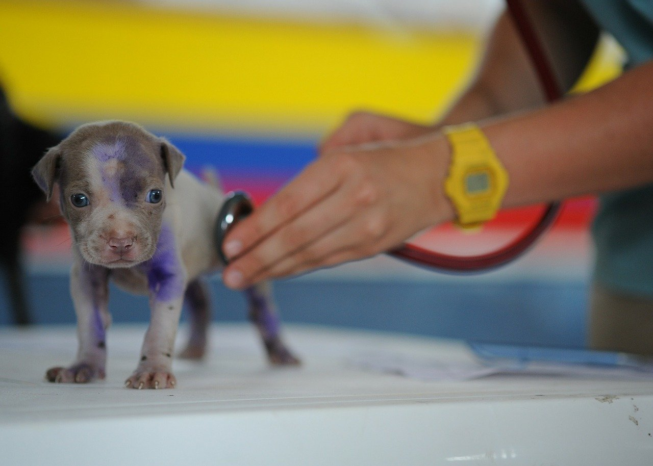 Vaccination Guidelines For Dogs - A Complete Guide