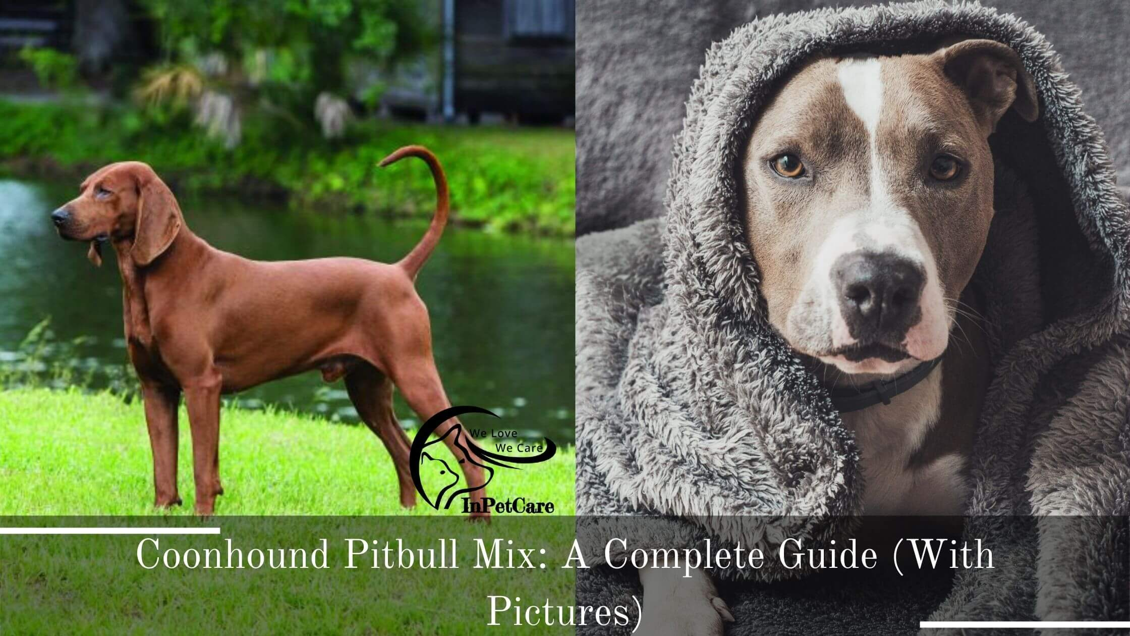 Coonhound Pitbull Mix: A Complete Guide (With Pictures)