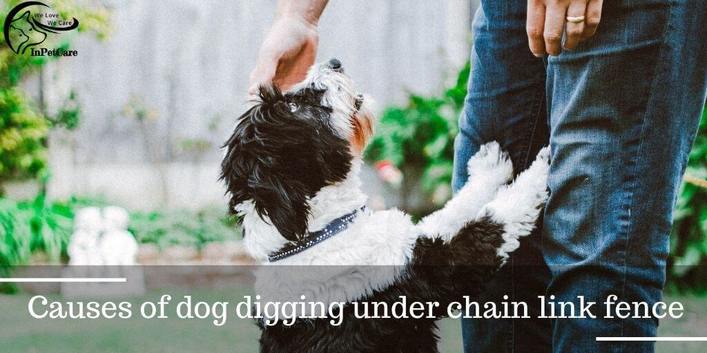 How To Keep The Dog From Digging Under Chain Link Fence?  Causes Of A Dog Digging Under Chain Link Fence
