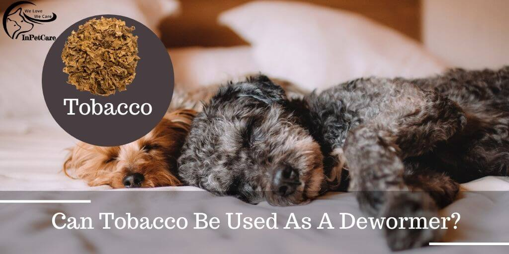 Can Tobacco Be Used As A Dewormer?