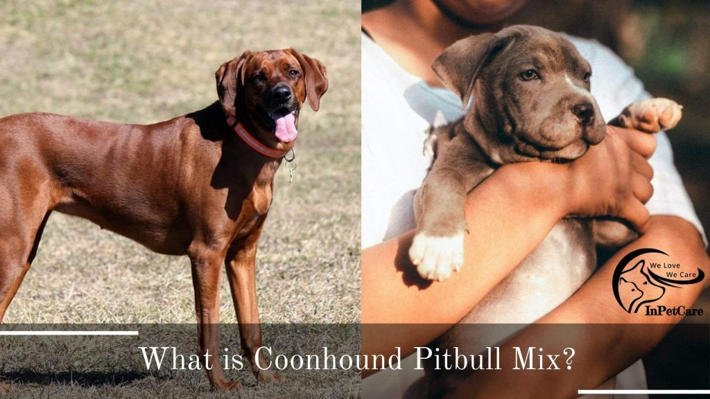 Coonhound Pitbull Mix Pictures, Pitbull Coonhound Mix Pictures
