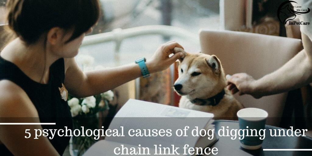 5 Psychological Causes Of A Dog Digging Under Chain Link Fence
