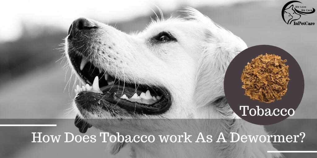 How Does Tobacco work As A Dewormer?