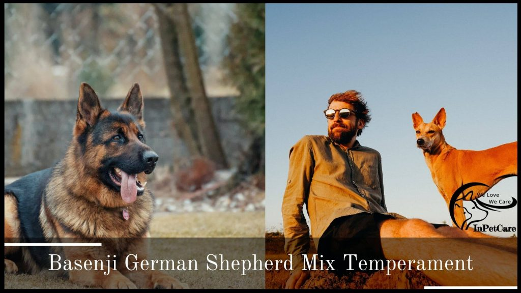 Basenji German Shepherd Mix Temperament