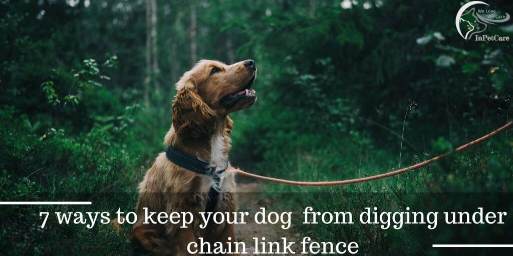 How To Keep The Dog From Digging Under Chain Link Fence?
