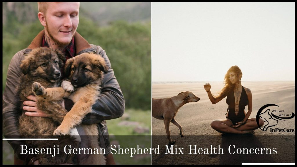 Basenji German Shepherd Mix Health Concerns