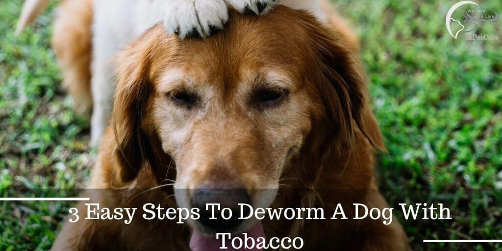 3 Easy Steps To Deworm A Dog With Tobacco