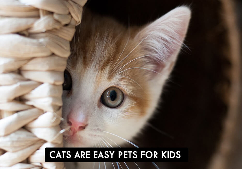 CATS: Easy Pets For Kids