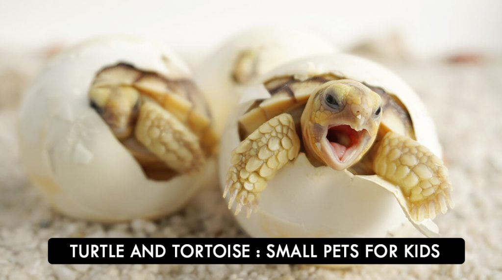 TURTLE And TORTOISE: Small Pets For Kids