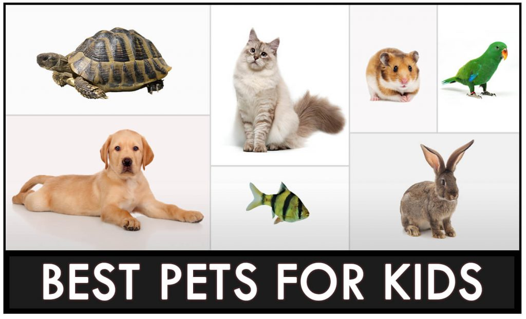7 Best Pets For Kids: What Are Good Pets For Kids.