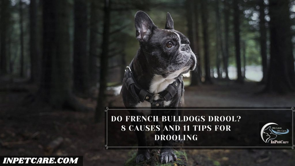 Do French Bulldogs Drool?