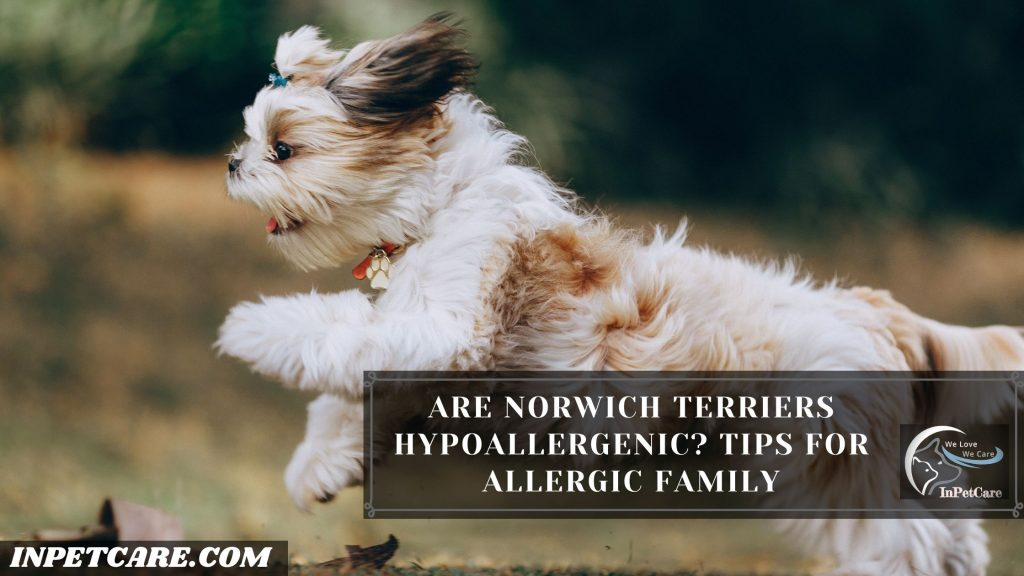 Are Norwich Terriers Hypoallergenic? Tips For Allergic Family