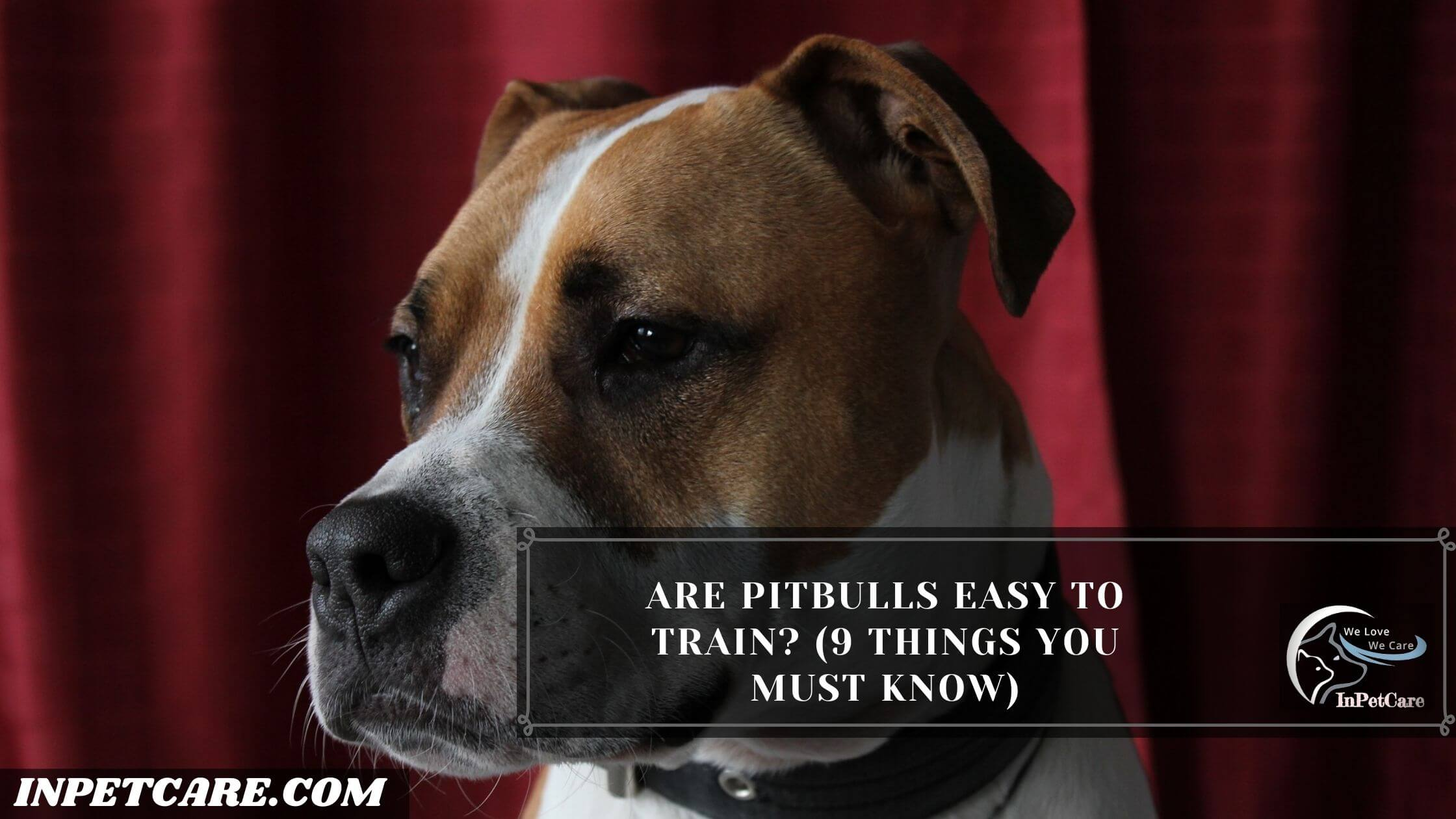 Are Pitbulls Easy To Train
