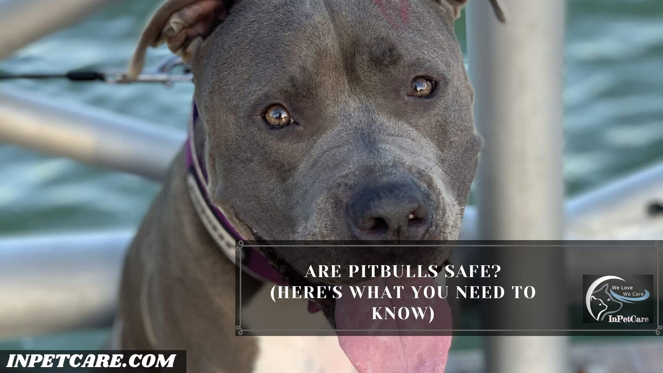 Are Pitbulls Safe