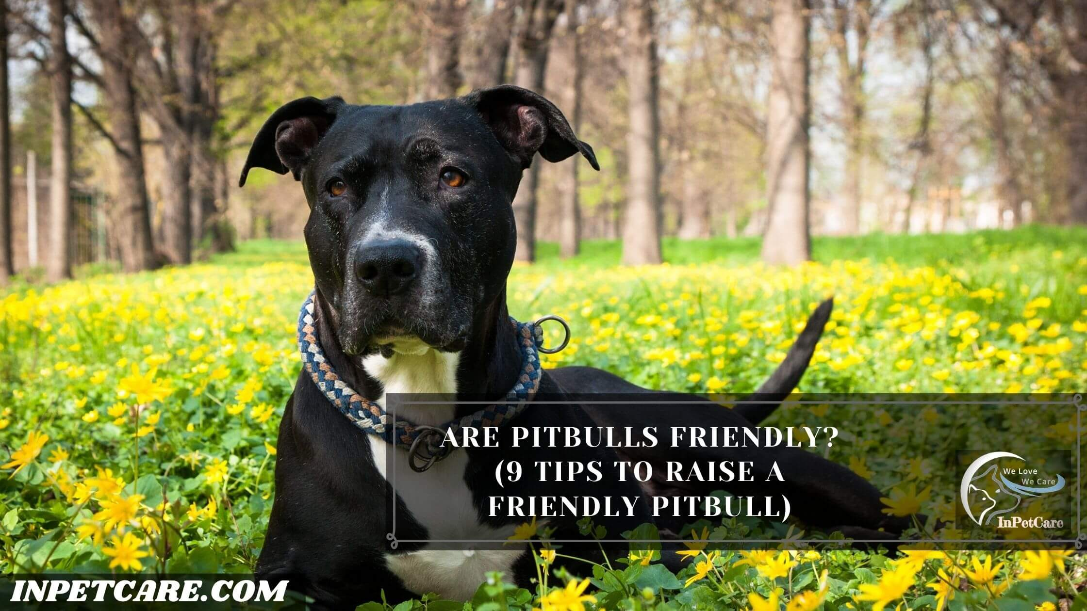 Are Pitbulls Friendly? (9 Tips To Raise A Friendly Pitbull)