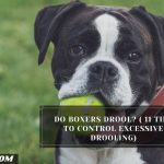 Do boxers drool? ( 11 Tips To Control Excessive Drooling)