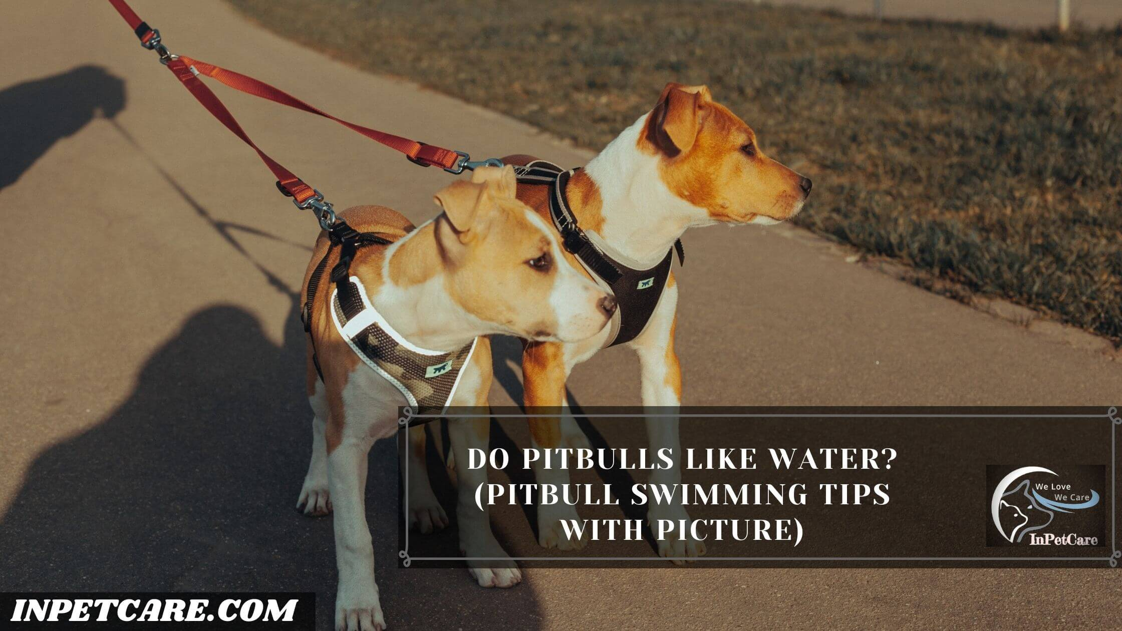 Do Pitbulls Like Water?