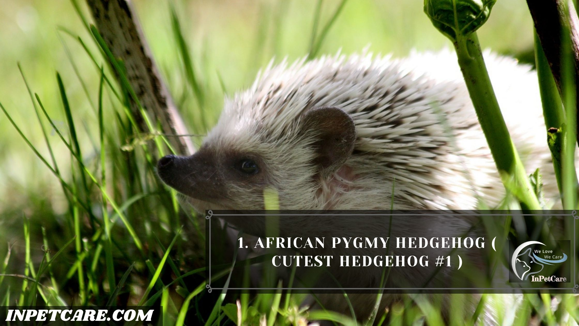 9 Cutest Hedgehogs Of The World To Pet (With Pictures)
