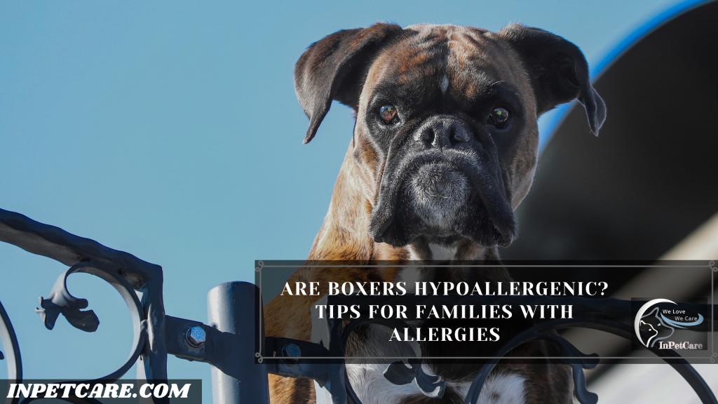 Are Boxers Hypoallergenic?
