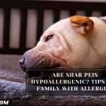 Are Shar Peis Hypoallergenic? Tips For Family With Allergies