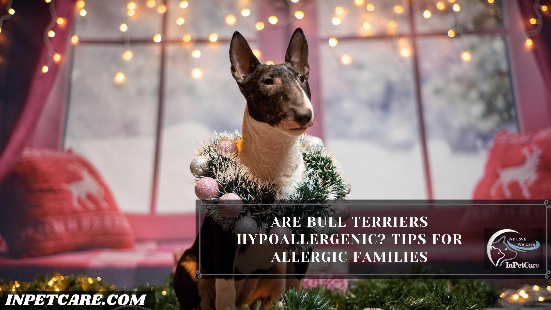 Are Bull Terriers Hypoallergenic? Tips For Allergic Families