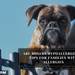 Are Boxers Hypoallergenic? Tips For Families With Allergies