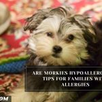 Are Morkies Hypoallergenic? Tips For Families With Allergies