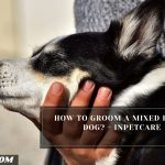 How To Groom A Mixed Breed Dog? - InPetCare