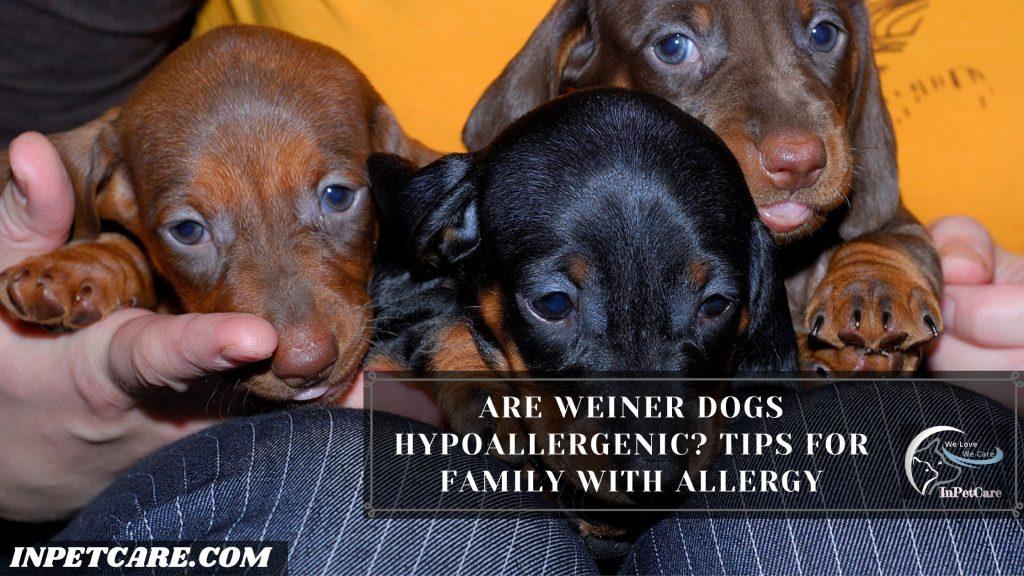 Are Weiner Dogs Hypoallergenic?