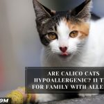Are Calico Cats Hypoallergenic? 11 Tips For Family With Allergy
