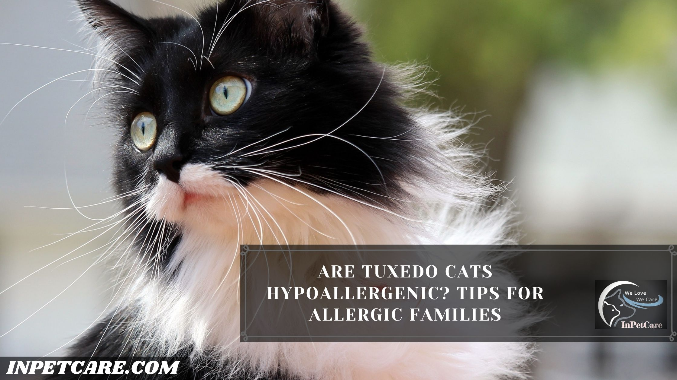 Are Tuxedo Cats Hypoallergenic? Tips For Allergic Families