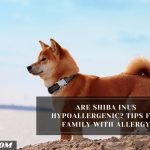 Are Shiba Inus Hypoallergenic? Tips For Family With Allergy